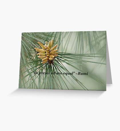 Aleppo pine - a prayer Greeting Card