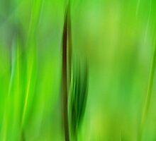 Lupine Leaves Artscape 12 by Imi Koetz