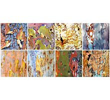 Collage of colourful Australian gumtree bark Photographic Print