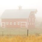 Foggy Farm Morning by Donald Siebel
