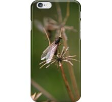 Flying Ant iPhone Case/Skin