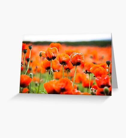 Poppies at Farm Tomita, Furano, Hokkaido, Japan Greeting Card