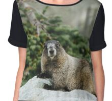 It's a Hoary marmot! Chiffon Top