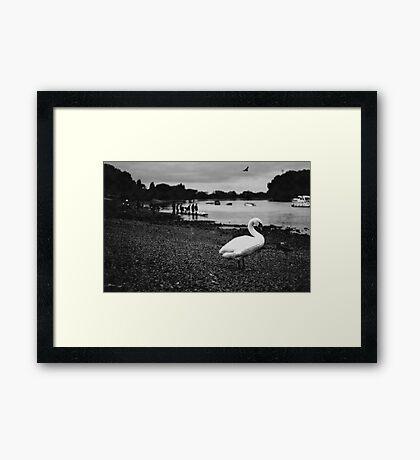 Rowing fan  Framed Print