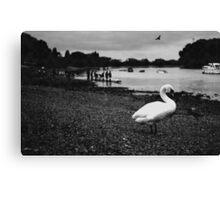 Rowing fan  Canvas Print