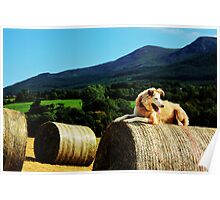 Pip and the Bales Poster