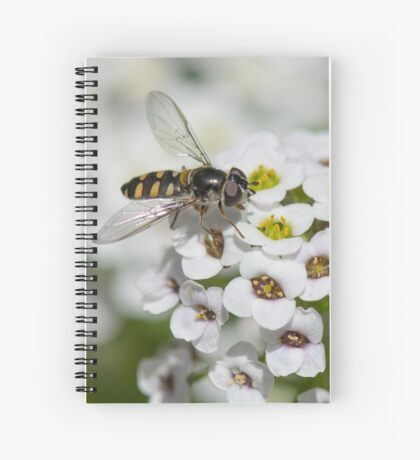 Hover fly on Alyssum Spiral Notebook
