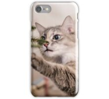 Cute grey cat investigating the decorations on a Christmas tree iPhone Case/Skin
