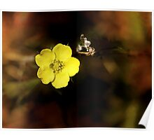 single yellow wild flower Poster