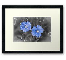 Gentle Blue Flower Framed Print