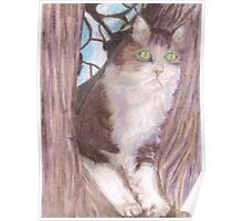 Cat in Tree Poster