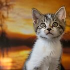 Tabby Kitten  by M.S. Photography/Art