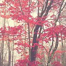 Autumn Red by Olivia Joy StClaire
