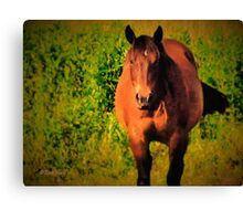"""Horses with Attitude no. 3, 'You Wanna Piece of This?'""... prints and products Canvas Print"