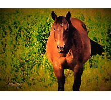 """Horses with Attitude no. 3, 'You Wanna Piece of This?'""... prints and products Photographic Print"