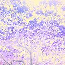 Jacaranda November 2016 by ShotsOfLove