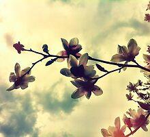 Magnolia by kishART