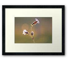 Backlit Weed Framed Print