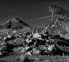 The Lonely Tree by Darren Brown