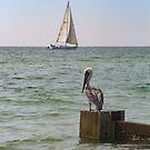 Pelican Watchman by Bob Hardy