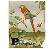 Macaw Parrot on Bamboo Tree Poster