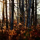 Afternoon Light in November III by Kathleen Daley