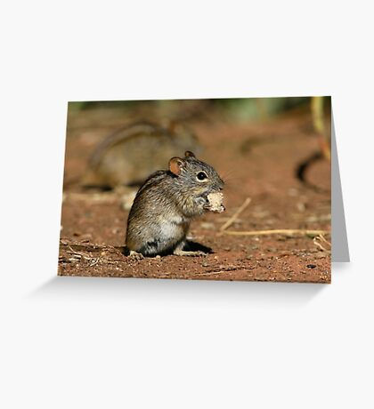 Striped Grass Mouse Greeting Card