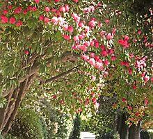 Magenta Pink Trees  by BrookeRyanPhoto
