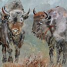 Buffaloes  by calimero