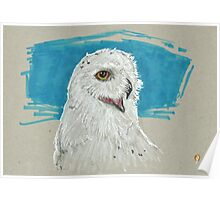 Blue Snow Owl Poster