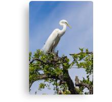 Great Egret Atop Tree Canvas Print