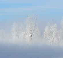 Cold morning by Jeannine St-Amour