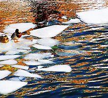Ice Floes in Sweden, Stockholm by Angelika  Vogel