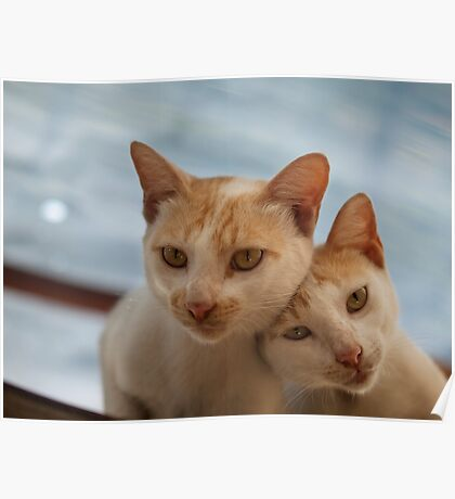 COUPLE CATS Poster