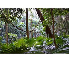 Temperate Rainforest Photographic Print