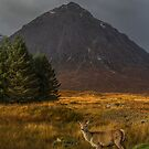 Red Deer Hind - Buchaille Etive Mor by Sandra Cockayne