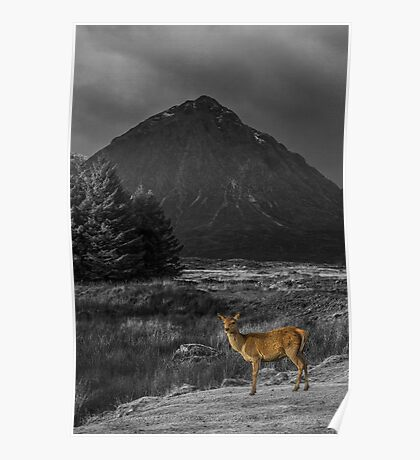 Red Deer Hind - Colour Popped Poster