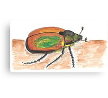 Insect drawing Canvas Print