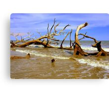Driftwood And Waves Canvas Print