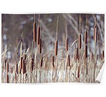 winter reeds Poster