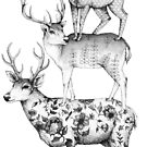 A Pile of Stags by Linn Warme