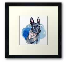 Blue Pit Bull Dog Watercolor Painting Framed Print