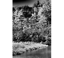 White Pines Forest State Park - Mt. Morris, IL  Photographic Print