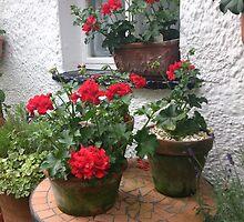 Geranium Cottage by Lynn Wright