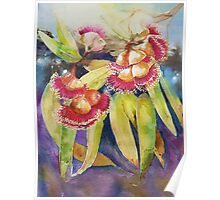 Red Gum Blossoms Highlights Poster