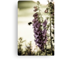 British Summertime Canvas Print