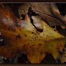 Autumn Leaf by Sheryl Gerhard