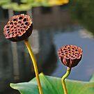 Sunbathing Seed Pods by Terri~Lynn Bealle