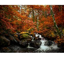 Two-Three-Four I Want More ~ Fall Colors ~ Photographic Print