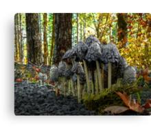 Stick Close ~ Shaggy Mane Mushroom ~ Canvas Print
